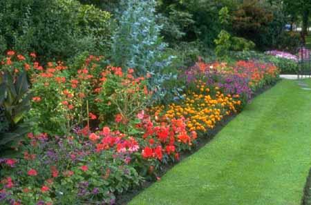 Choosing Plants For Yard